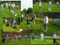 Puppy cursus in Amersfoort