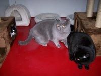Kattenpension Kattenhotel Kattenoppas Kattenverzorging