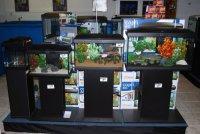 Profesionele aquaria, kleine prijzen
