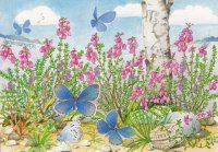 Heideblauwtjes Annet Planten