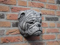 Engelse Bulldog Hoofd.