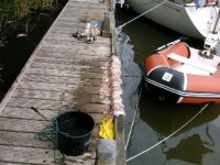 Aangeboden: Rubberboot Lodestar € 400,-