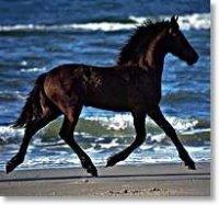 Aangeboden: Paardrijlaarzen Cap Chaps Rijbroek Handschoenen Wedstrijdjasjes Witte Rijbroek Blouses n.o.t.k.