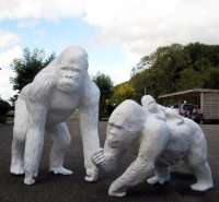 Gorilla wit IBIZA STYLE