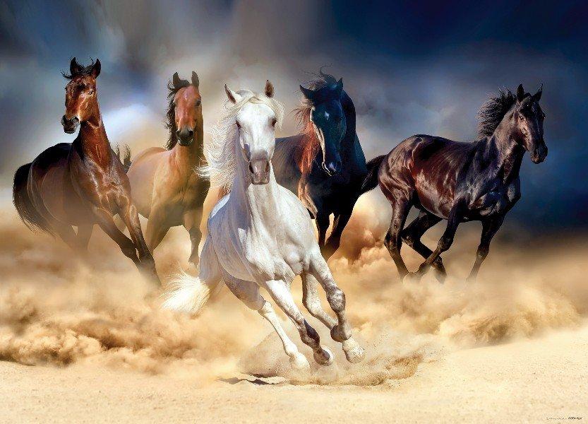 Paarden Behang Posterbehang.Paarden Behang Fotobehang Muurdeco4kids