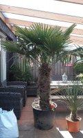 Winterharden palmen, siergrassen, bamboe en aanverwante