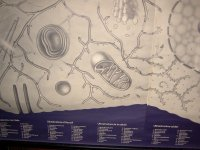 Aangeboden: Wandplaat :Ultra structure of the cell € 50,-