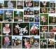 10 foto's