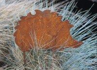 Grappige metalen roestige egel SE231