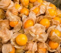Ananaskers, mooie lampionnetjes waarin die heerlijke