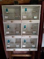 Te koop: vogelkooi voor kanaries