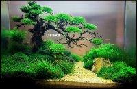 Handgemaakte`bonsaibomen voor aquascape