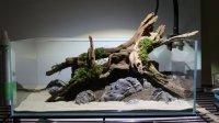 Aquarium hout, driftwood, spiderwood, import ook