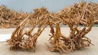 Spiderwood, ideaal hout voor in het