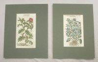 2 botanische  prenten  John
