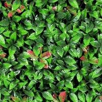 Aangeboden: Kunsthaag Jungle Red Photinia 1m2, volle dekking € 67,80