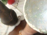 Salamander vazen 2stuks