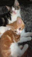 4 lieve kittens