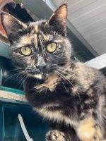 Annie..schattig kitten,zie ook Lexi