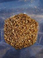 Gamarus ( gedroogde zoetwater garnalen )